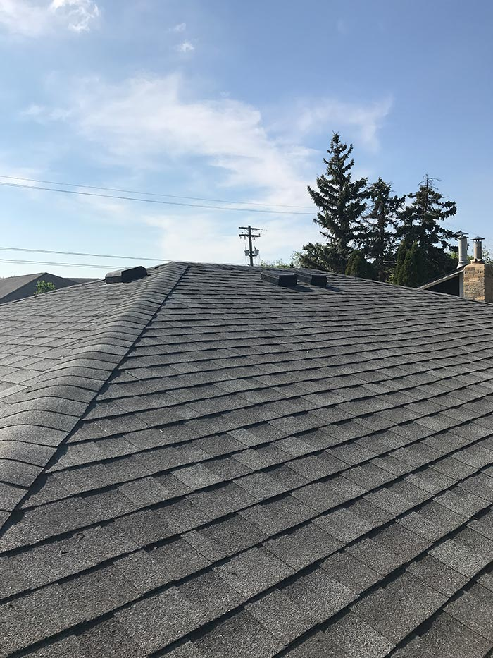 black roof tiles near green pine tree during daytime